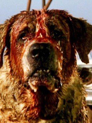 TOP 10 HORROR MOVIES about dogs