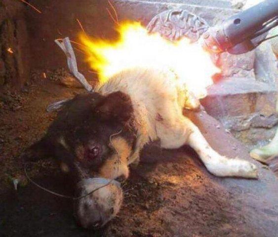 Killing Dog for Dinner