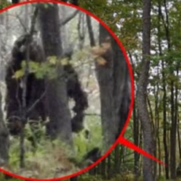 5 Most Believable BIGFOOT Sightings