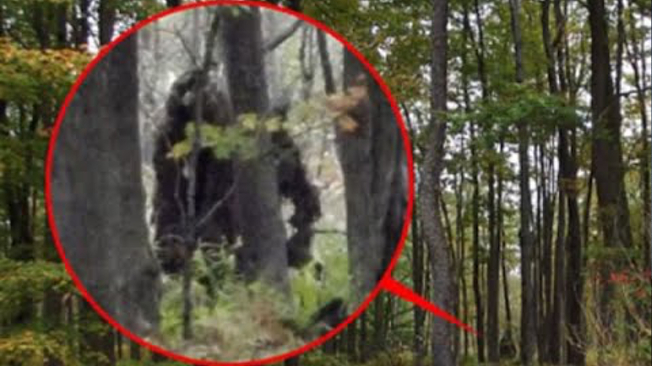 5 Most Believable BIGFOOT Sightings / Footage | Horror Galore